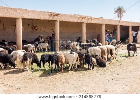 Rissani Morocco - May 09 2017: Moroccan sheep merchants are sitting in the shade at the sheep market in Rissani Morocco while waiting for customers.