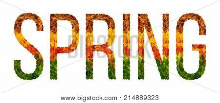 spring word is written with leaves white isolated background
