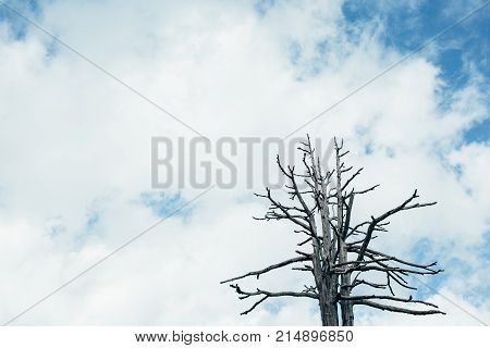dry tree against the cloudy sky, dead tree