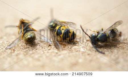 Dead wasps The concept of a tired worker