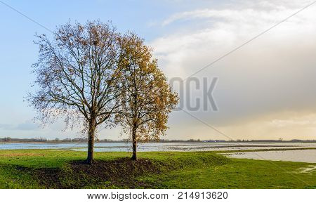 Largely flooded polder area in the Netherlands. In the foreground are two tall almost bare trees. It is a sunny day in the autumn season.