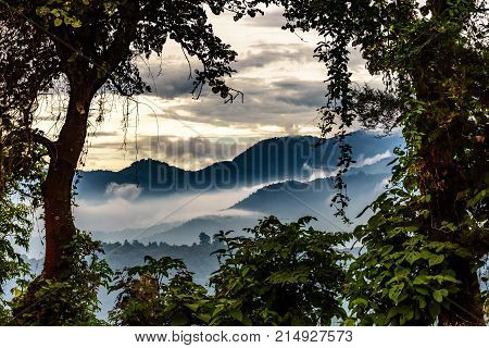 Misty hills at sunset framed by trees in Guatemala, Central America