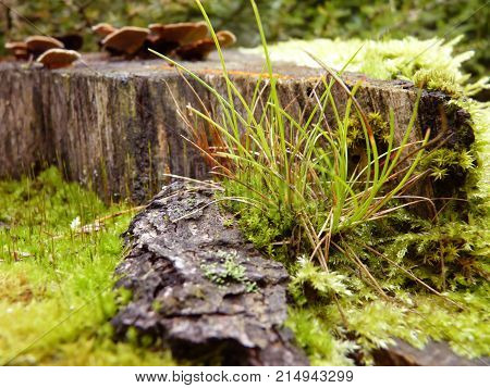 Moss And Grass Growing In Forest On Tree Stump Close Up Macro