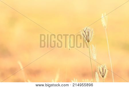 Abstract Blur Of Flower And Grass For Background