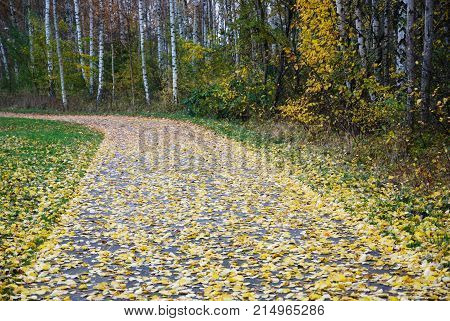 Autumn colors of fallen aspen leaves on a footpath