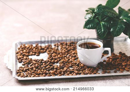 Coffee Plant Tree, Espresso And Roasted Coffee Beans. Horizontal View