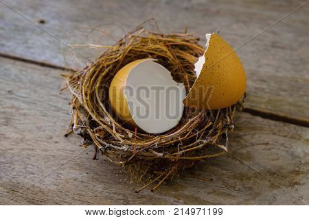 Bird's Nest with Scattered Eggshell on an old Wood Panel