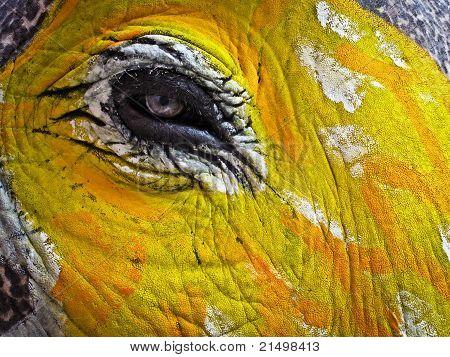 Painted Elephant's Eye