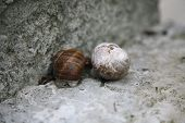 Two snails together by the concrete wall poster