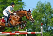 Equestrian sport - young woman jumping with bay horse poster