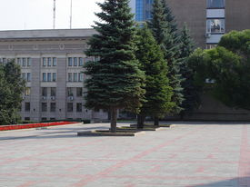 Square With Trees