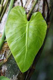 Macro shot of a fresh green leaf after rain.