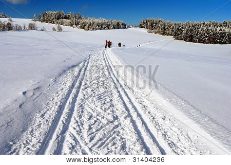 wintry landscape scenery with modified crosscountry skiing way
