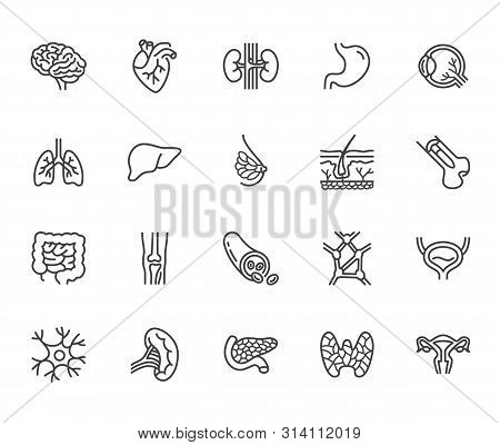 Organs, Anatomy Flat Line Icons Set. Human Bones, Stomach, Brain, Heart, Bladder, Nervous System Vec