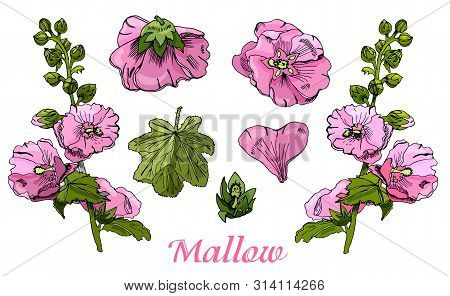Collection With  Bouquet And Single Flowers Of Pink Mallow And Green Leaves. Hand Drawn Ink And Colo