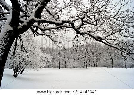 A Snow-covered Oak Branch Hangs Over A Forest Lake Covered With Ice And Fluffy Snow. Winter Landscap