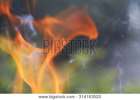 Texture. Bonfire. Orange Flame Of A Fire. Burning Birch Tree In The Fireplace.