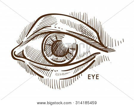 Eye Pupil And Iris Eyelid And Eyeball With Lashes Isolated Sketch