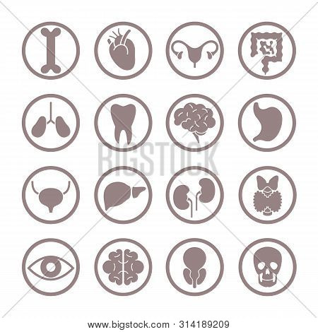 Human Organ Icons. Lungs And Kidneys, Heart And Brain. Stomach And Liver, Intestines And Bladder Int