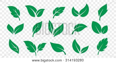 Green Leaf Icons Set On White Background. Vector Vegetarian, Vegan, Eco And Organic Herbal Logo Labe