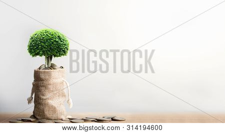 Coins In Sack And Small Plant Tree. Pension Fund, 401k, Passive Income. Savings And Making Money. In