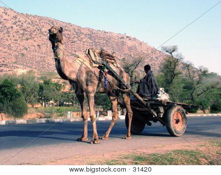 camel, camel-cart, cart, india, poster