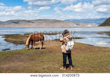 Young Woman Traveler Taking A Picture Of Horse In Napa Lake Grassland At Shangri-la Yunnan