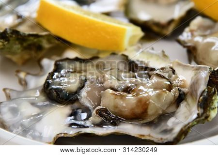 Fresh raw oysters close-up on white plate, served table with raw oysters and lemon. Healthy sea food. Fresh oyster dinner in restaurant. Gourmet food closeup. Saltwater oysters poster