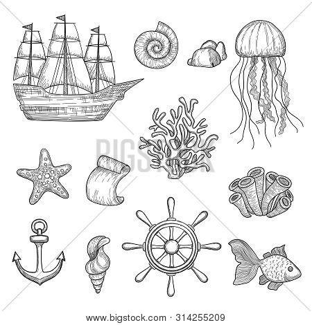 Nautical Elements. Ocean Fish Shells Boats Ships Knot Travel Marine Symbols Vector Hand Drawn Collec
