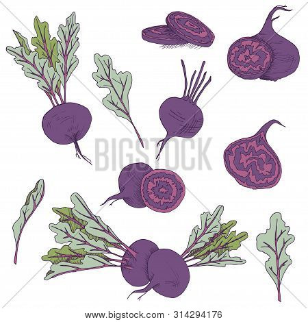 Vector Clip Art Set Of Beetroots. Isolated Purple Vegetables On White Background