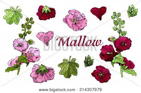 Collection With  Bouquet And Single Flowers Of  Maroon And Pink Mallow Flowers And Green Leaves. Han