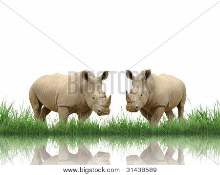rhinoceros with green grass isolated on white background