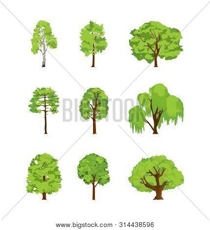 Cartoon Trees Differents Birch Poplar Elm Chestnut Willow Maple Linden.