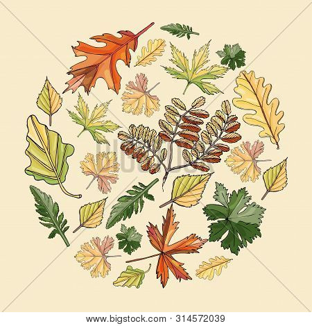 Circle Composition With Autumn Color  Leaves Of Different  Trees And Flowers  On Light Yellow  Backg
