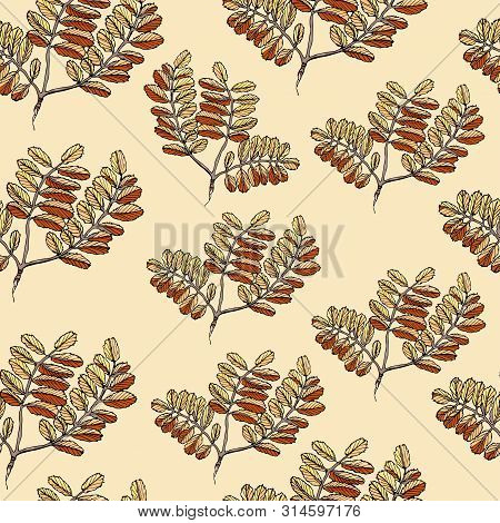 Seamless Pattern With  Color Leaves Of Rowan Tree. Hand Drawn Ink Sketch Isolated On Light Yellow Ba