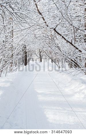 Cold Winter Forest In The Afternoon Covered With Snow