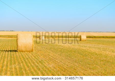 Straw Bales on the Bright Yellow Field under the Blue Sky.
