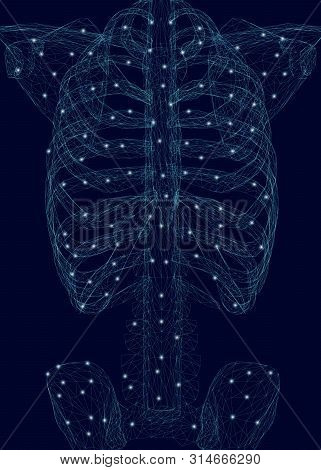 Human Thorax. Polygonal Wireframe Of A Human Skeleton Made Of Blue Lines On A Dark Background. Vecto