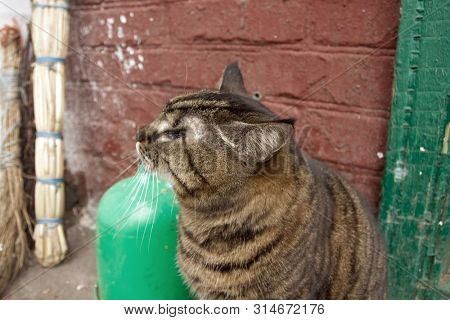 Homeless cat with one eye. Street cat without eye. Street tramp cat. A lonely homeless animal
