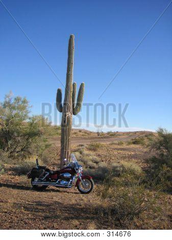 Bike And Cactus_