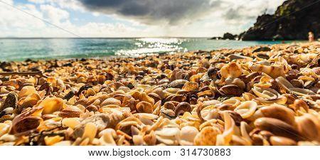 St. Barth's Island (st. Bart's Island), Caribbean Close-up Photo Shells On The Shell Beach In Gustav