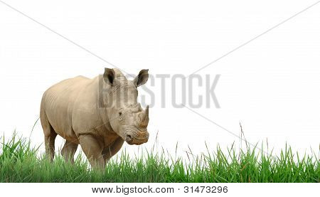 rhiniceros with green grass isolated on white