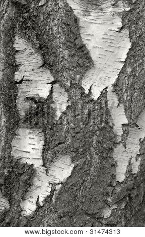 Cracked Rough Bark Detail