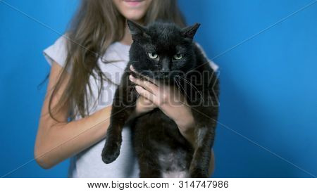 Pet Concept. Frail Girl Holding A Black Arrogant Cat. Cat Scars From Street Fights.