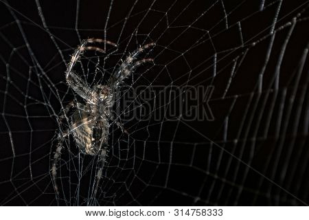 Spider In A Black Background. Spider On Web A Macro Wildlife Background. Macro Spider On A Black Bac