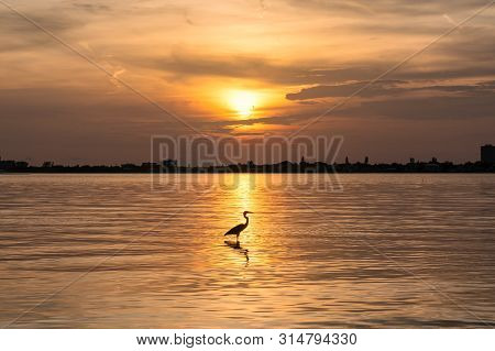 Heron Bird At Sunset In Siesta Key Beach, Sarasota, Florida