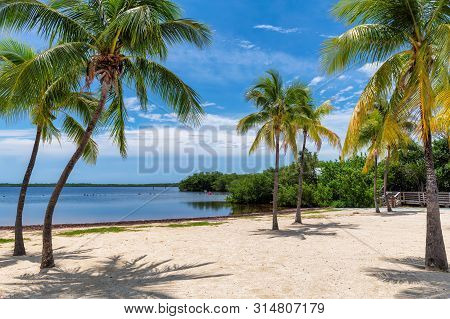 Sunny Beach With Palms And Caribbean Sea In Coral Reef Park, Key Largo, Florida.