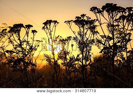 Beautiful Spring Landscape With A Blooming Flowers On Meadow In Sunshine. Black Silhouette Of Flower