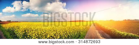 Panoramic Summer Landscape With Rapeseed Field And Country Road