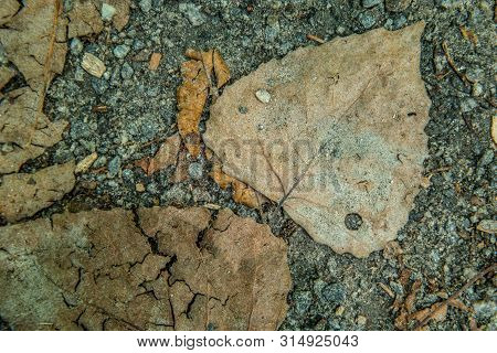 Fallen Leaves On The Ground Crushed From Walking On And Covered With Gritty Sand From The Path On A